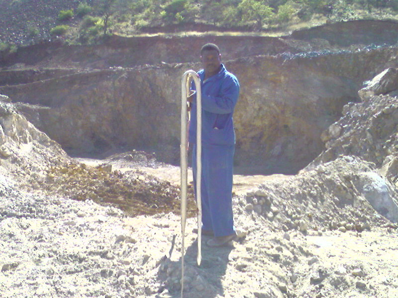 A worker poses with a Black Mamba killed in C Pit